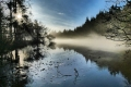 01 Morning Mist Forest of Dean_Vanessa Lacey
