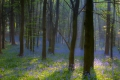 01 Morning Sun in Bluebell Wood_Mike Loose