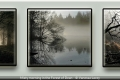 Vanessa Lacey_Misty morning in the Forest of Dean